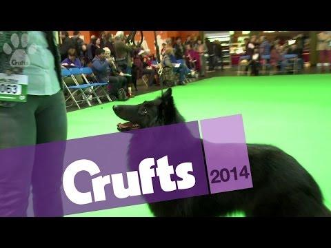 Best of Breed   Belgian Shepherd Dog   Crufts 2014