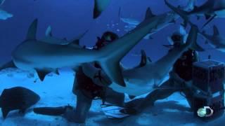 Reef Shark Tonic Immobility | Zombie Sharks