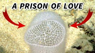 Glass Sponge | Animal Fact Files Mp3