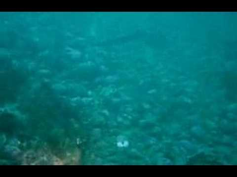 Dogfish Sharks In Puget Sound