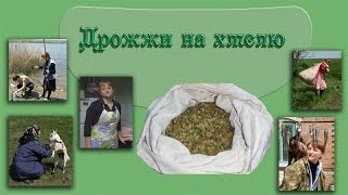 Закваска для хлеба из хмеля и отрубей