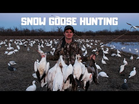 Snow Goose Hunting - The Giant Pit