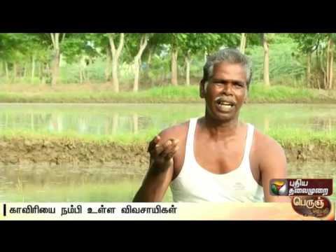 Agricultural land in Cauvery delta has reduced due to irregular monsoon | Details