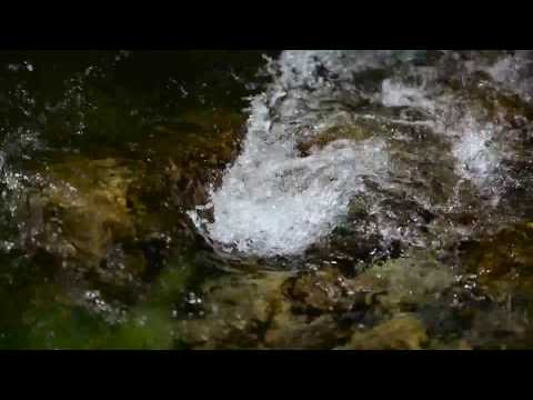 Озеро. Туман. Утро. Звуки природы. Птицы поют. Природа. Релакс. Медитация. Нью Эйдж. Чил-аут.из YouTube · С высокой четкостью · Длительность: 10 мин31 с  · Просмотров: 321 · отправлено: 17-9-2016 · кем отправлено: Природа Зарисовки