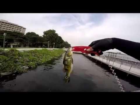 Fishing In Singapore: Smallies At Pandan, July 2016