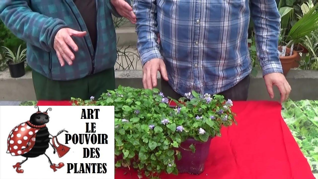 Conseils jardinage comment faire la culture et division for Conseil jardinage