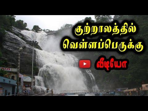 குற்றாலத்தில் வெள்ளப்பெருக்கு | increasing water flow to Courtallam - Oneindia Tamil