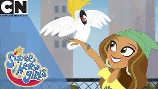 DC Super Hero Girls | Pet Adoption | Cartoon Network UK