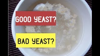 Yeast Types & How To Proof Yeast