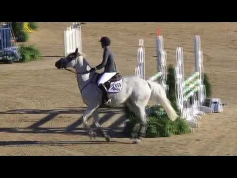 Video of LARINETA ridden by ANDREA VOGEL from ShowNet!