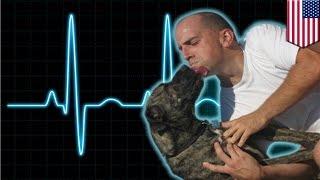Мужчина сделал искусственное дыхание собаке, сожравшей ядовитую жабу
