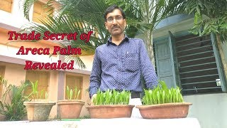 Propagation of Areca Palm from seeds : The Trade Secret Revealed.