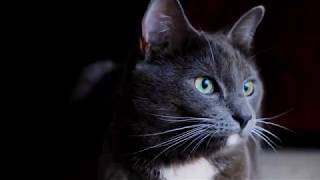 The funniest and most humorous cat videos ever! - Funny cat compilation 2020