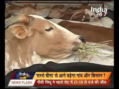 Modi's government planning for Cattle Insurance scheme for farmers