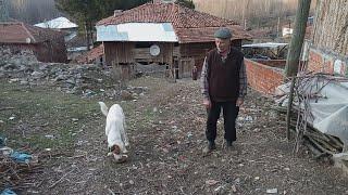 Köyde hayat köpeklere bakım zamanı
