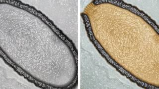 5 Misteriosas Cosas Encontradas Congeladas Bajo El Hielo