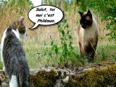 chat des villes, chat des champs
