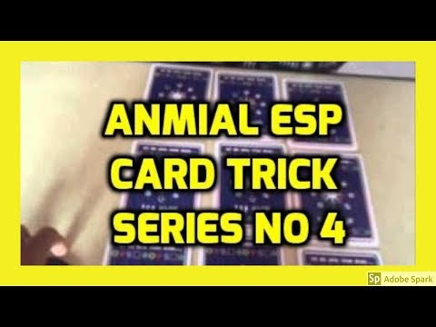 ONLINE MAGIC TRICKS TAMIL I ONLINE TAMIL MAGIC #358 I ANIMAL ESP CARD TRICK NO 4