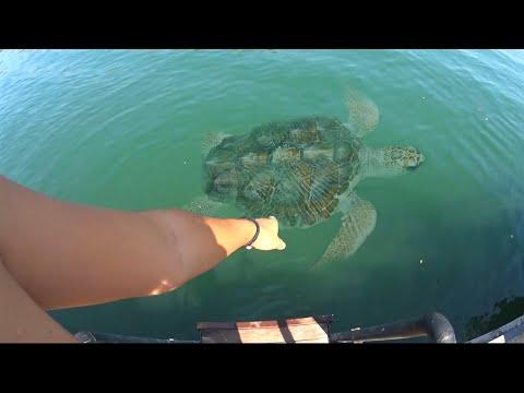 Dev Kaplumbağa Altımdan Geçti - Vlog 5