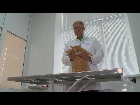 В Ставрополе открылась новая ветеринарная клиника.