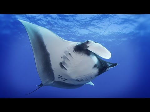 Seven Years With Mantas: A Journey of Discovery