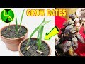 how to grow date palm tree from seed at home