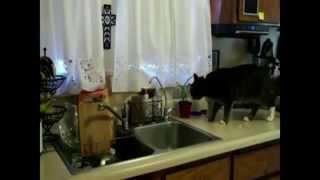 Супер подборка приколов про кошек от ПосипакИ #24 или как отучить котов лазить на стол!