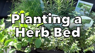 Building & Planting a Herb Bed in Clay Soil