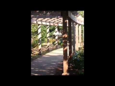 Erik Satie Gymnopedies No 2 arr MLloyd2014 and Beacon Hill Park Victoria BC