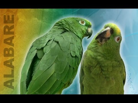 Unbelievable Singing parrot - parrots that sing a song, talking parrot