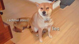 Potat: henlo daddo, Shiro: Insolent
