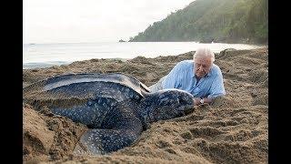 Saving Leatherbacks in Trinidad | Planet Earth: Blue Planet II | Saturdays @ 9/8c on BBC America