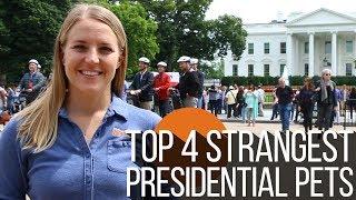 Wild Kingdom –Top 4 Strangest Presidential Pets