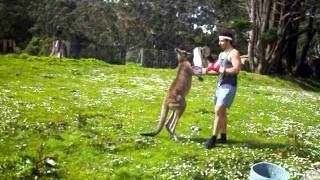 Man VS Kangaroo ROUND 2