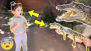 SURPRISING PENELOPE WITH A BABY ALLIGATOR!!!