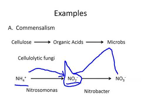 Lecture 11: Soil microbial ecology
