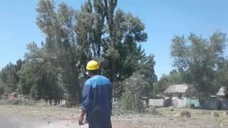 Трасса Кара-Балта - Бишкек. для расширения трассы вырубают деревья