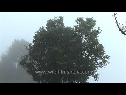 Cherrapunji - The Rain Capital of the World