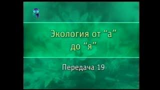 Экология. Передача 19. Жизненные формы растений и животных
