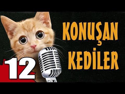 Konuşan Kediler 12 - En Komik Kedi Videoları