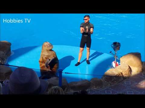 YOU LAUGH YOU LOSE – Funny Smart Cute Sea Lion Videos – The Best Show Ever For Sea Lions