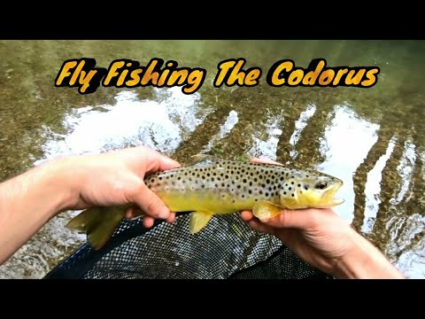 fly-fishing-the-codorus-creek-for-wild-browns