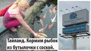 Тайланд. Кормим рыбок из бутылочки с соской. Милые животные.