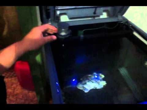 Sera biotop 130 explication aquarium marin youtube for Sera aquarium