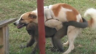 incredible , animals mating fail compilation , seduction tactics , psychotic lovers in nature.part 3