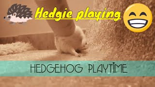 Hedgehogs love to play with toilet paper rolls