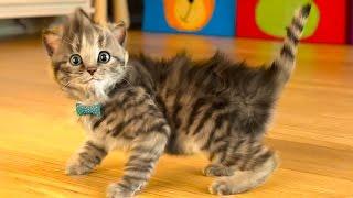 МОЙ Маленький КОТЕНОК СИМУЛЯТОР котика как мультик виртуальный питомец видео для детей #ПУРУМЧАТА