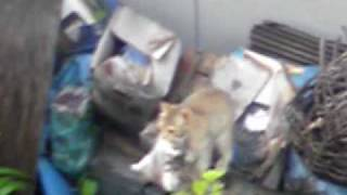 母猫の助けを待つ仔猫とその泣き声に答える母猫。