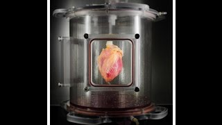 SCIENTISTS GROW FULL-SIZED, BEATING HUMAN HEARTS FROM STEM CELLS thumbnail