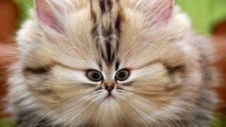+100500 Приколов с котами #1
